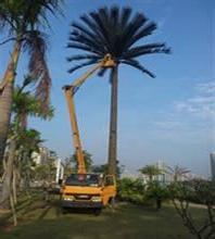 高空车蜜桃网修剪树木